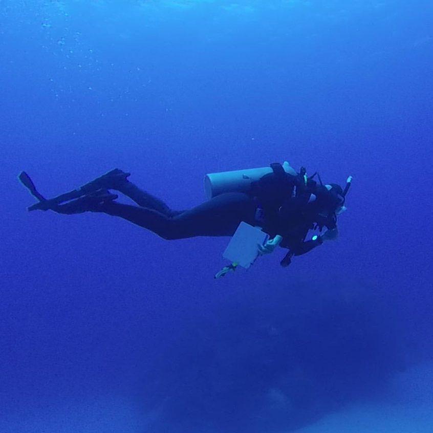 Fish Identification in The Bahamas