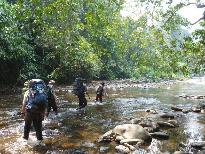 Borneo Jungle Gap Year