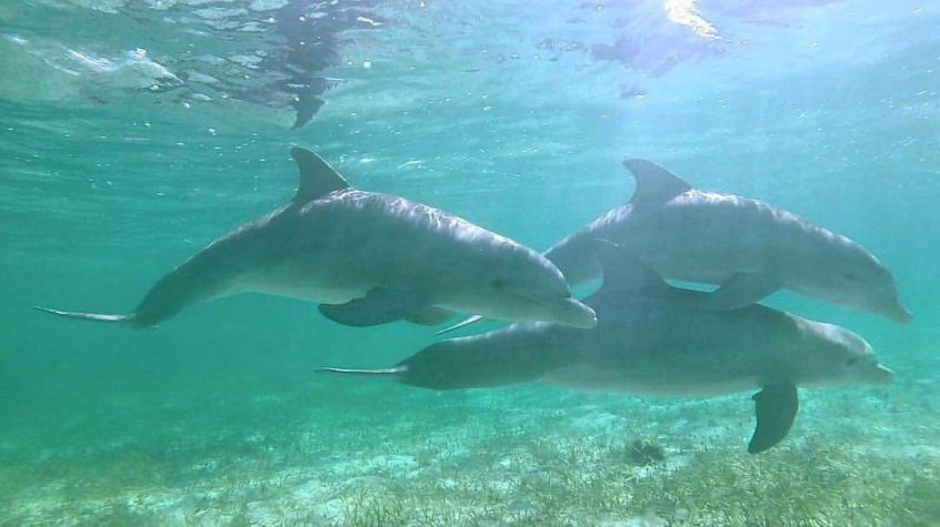Dolphins in the bahamas on gap year