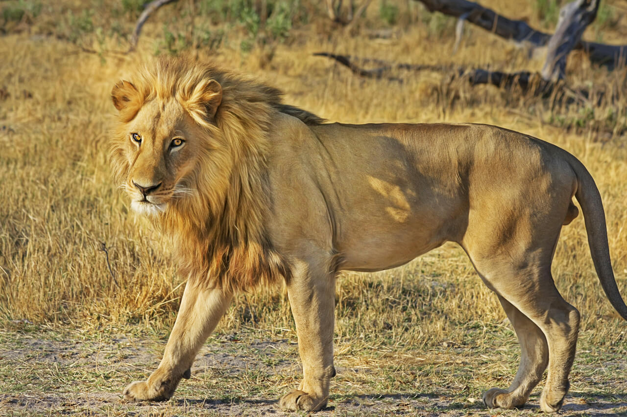 Work with wildlife on your gap year in south africa