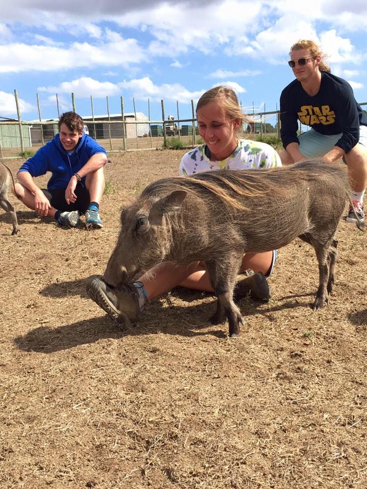 Warthog Conservation on a gap year in south africa