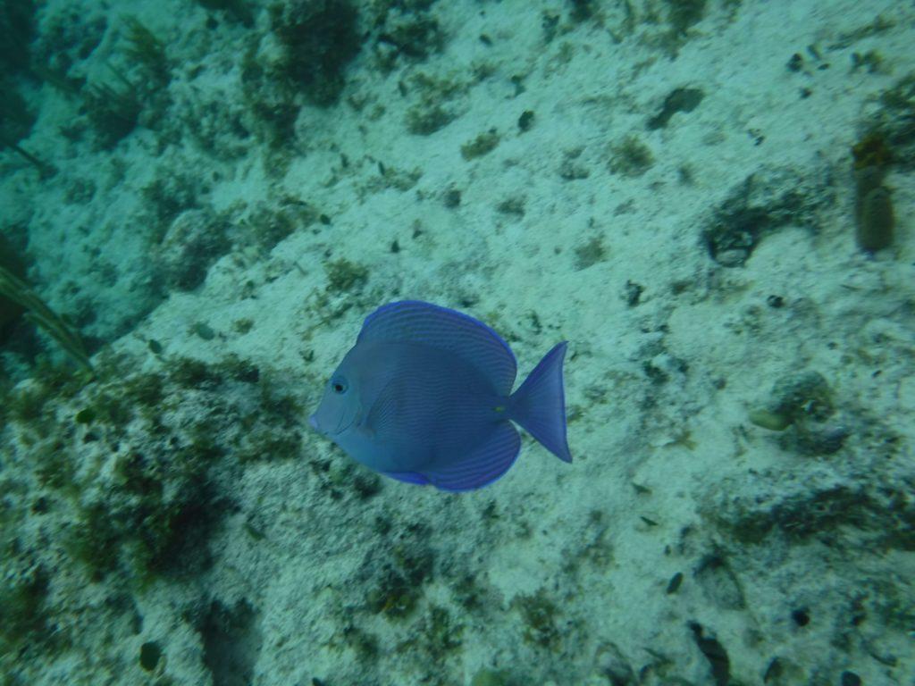 Fish in the bahamas