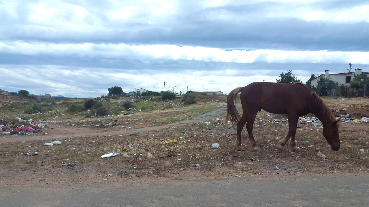 Horse in Oudtshoorn South Africa