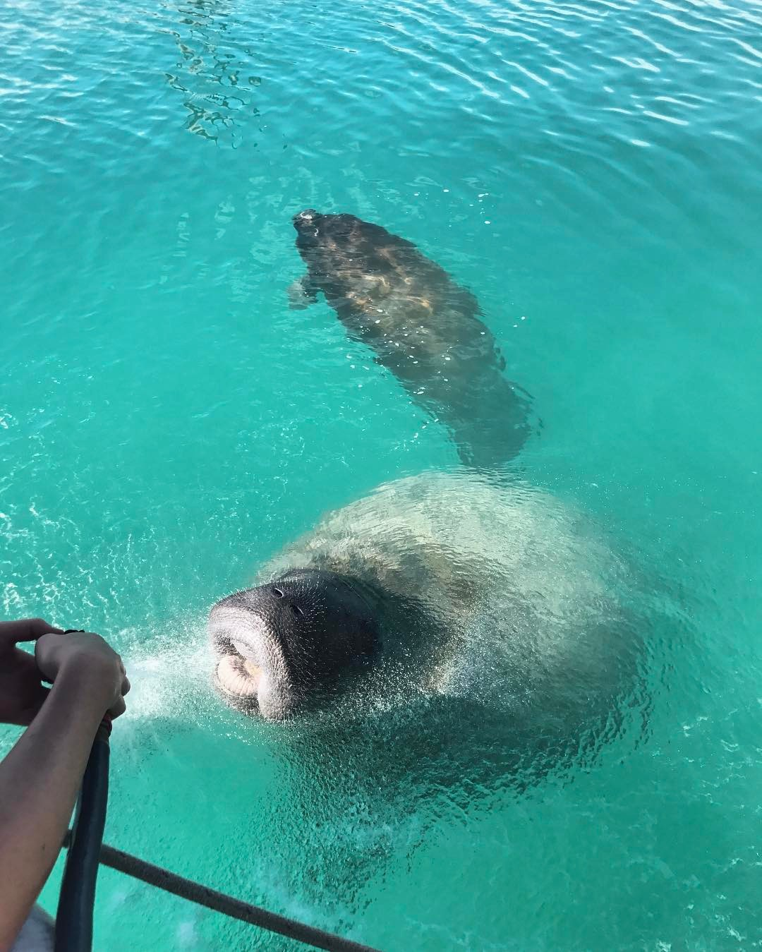 Seeing Manatees on a gap year in the bahamas