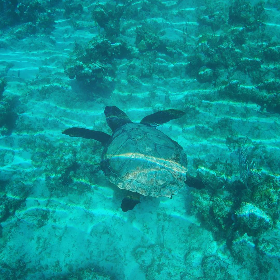 Swimming with turtles in the Bahamas on a gap year
