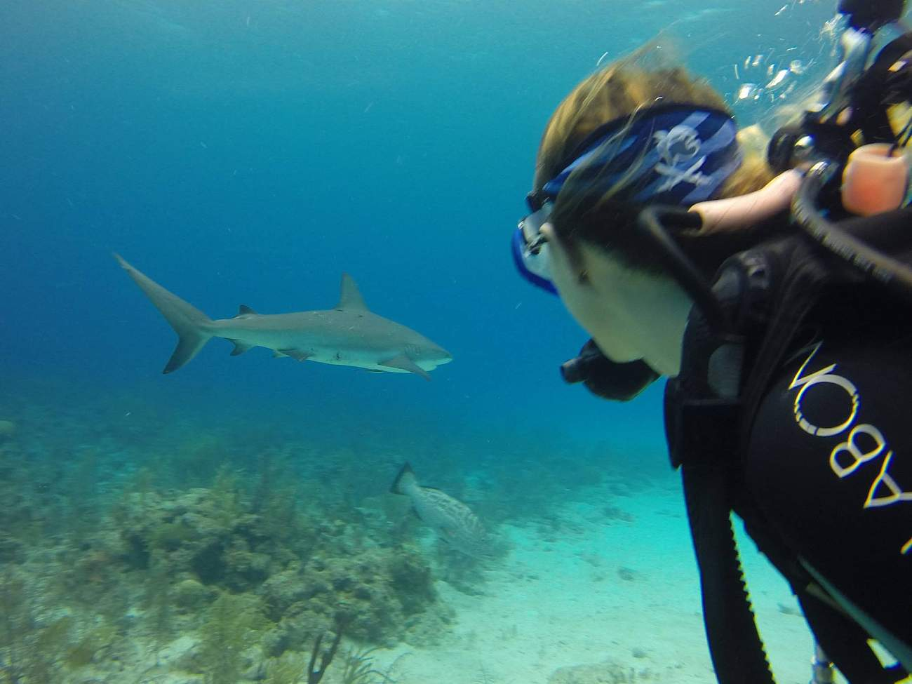 Bahamas Marine Conservation - Gap Year program