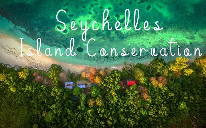 Seychelles Island Conservation - Gap Year Program