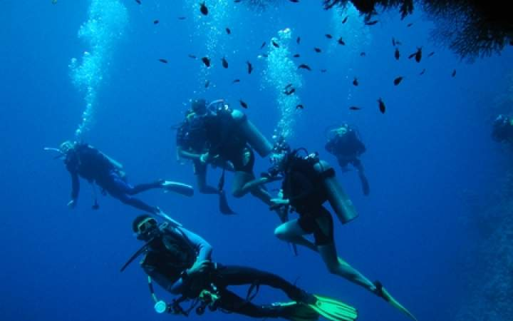 Marine Scientist Training - Gap Year Program