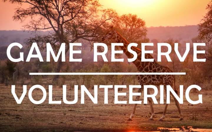 Game Reserve Volunteering - South Africa - Gap Year Program