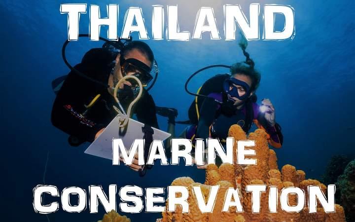 Meeresschutzprojekt & Tauchausbildung in Thailand - Gap Year Program