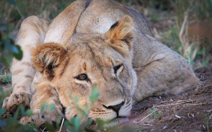 South Africa Conservation Management Course - Gap Year Program