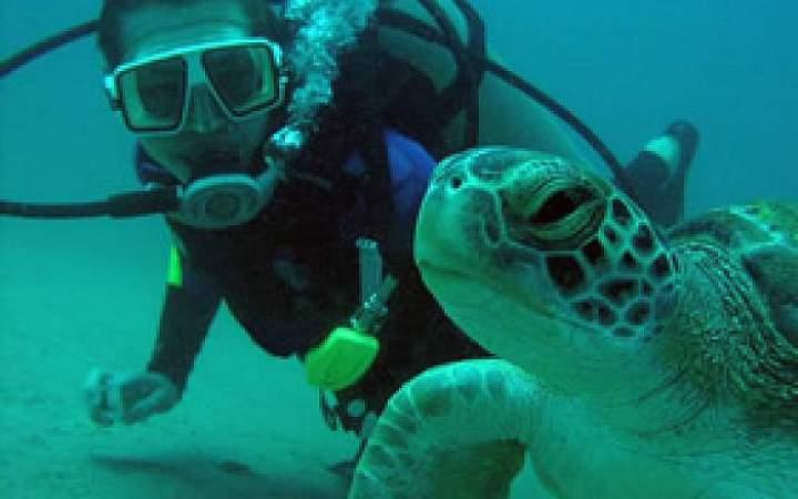 Bahamas Marine Conservation - Gap Year Program